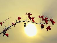 Έλληνες θα ειπεί όσο ζεις, να δοξάζεις με τους γείτονες τον ήλιο και τον άνθρωπο
