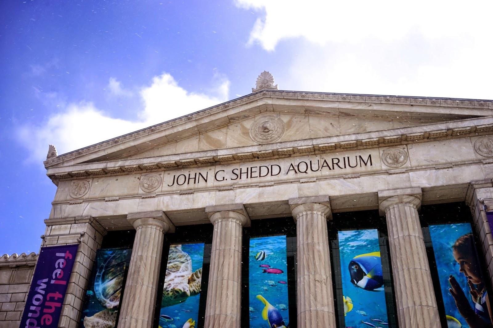 John shedd aquarium