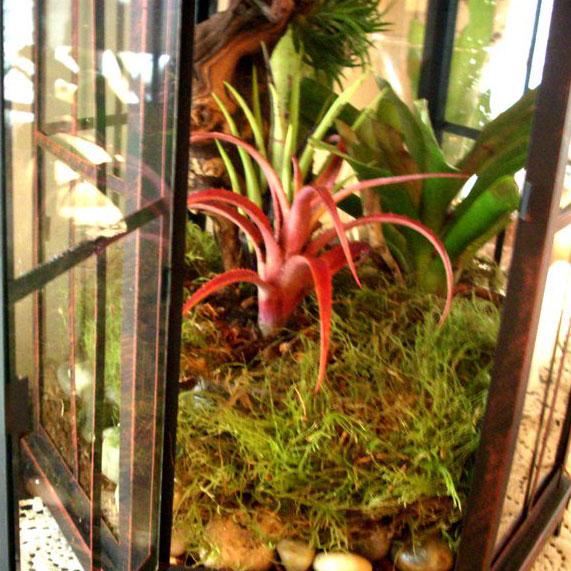 The Rainforest Garden How To Plant A Terrarium