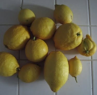 too many lemons