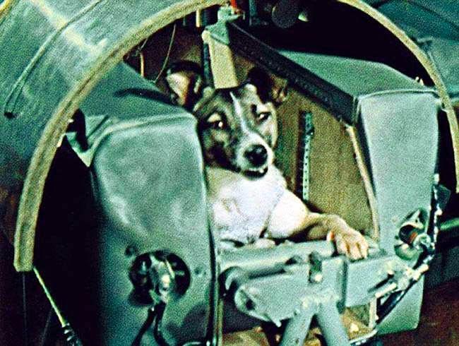 Про лайку - первую собаку-космонавта, Первое животное в космосе