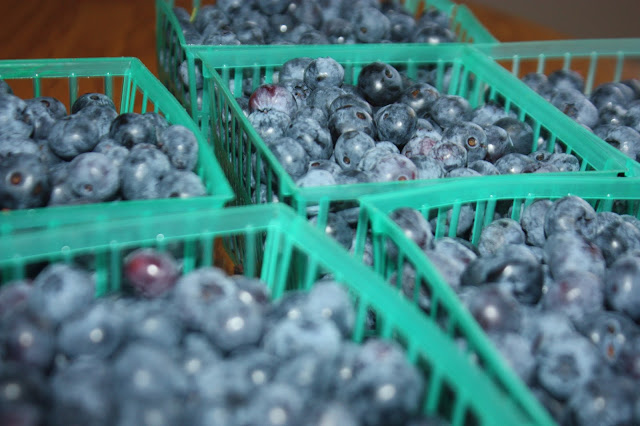 Fresh blueberries in pint containers