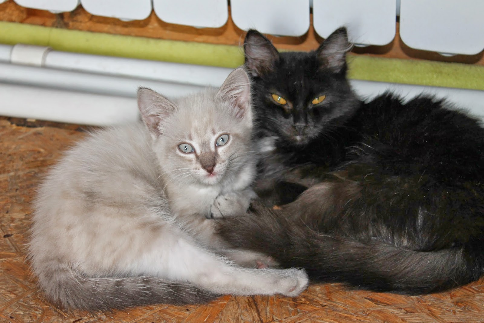 грязные кошки