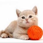 Les jouets du chiot et du chaton