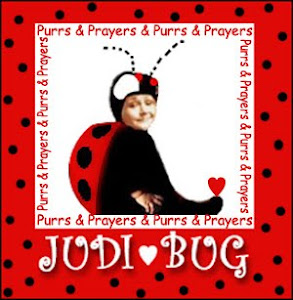 Purrs and prayers for Judi bug