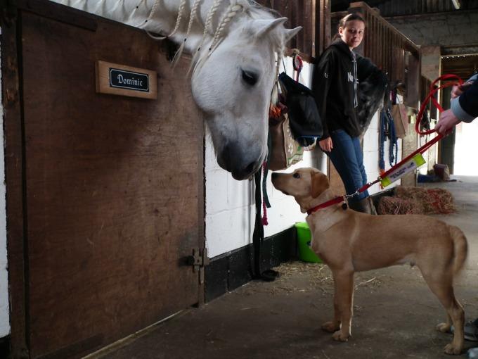 Horse meeting Medical Detection Dog