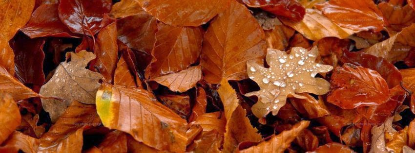 Couverture facebook pluie de novembre 03