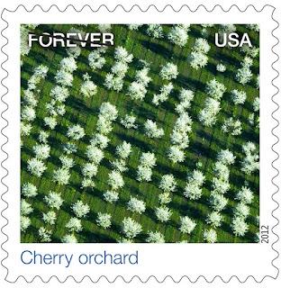 cherry+orchid.jpg