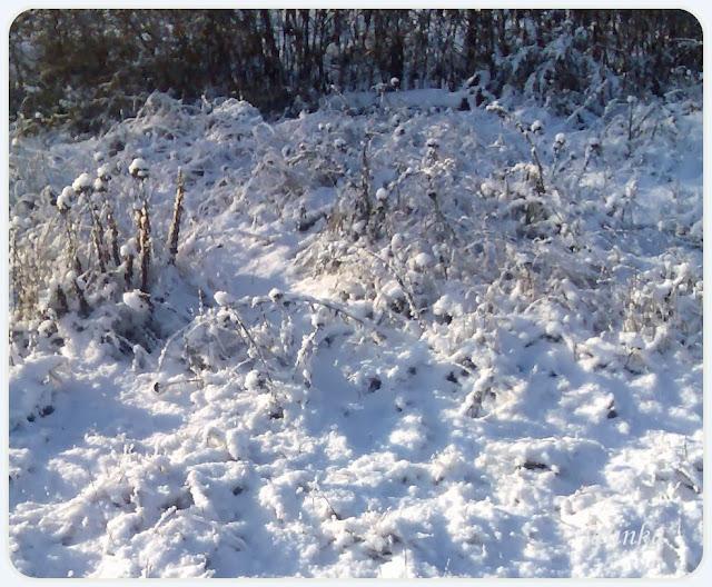 зима снег выпал первый снего новый год