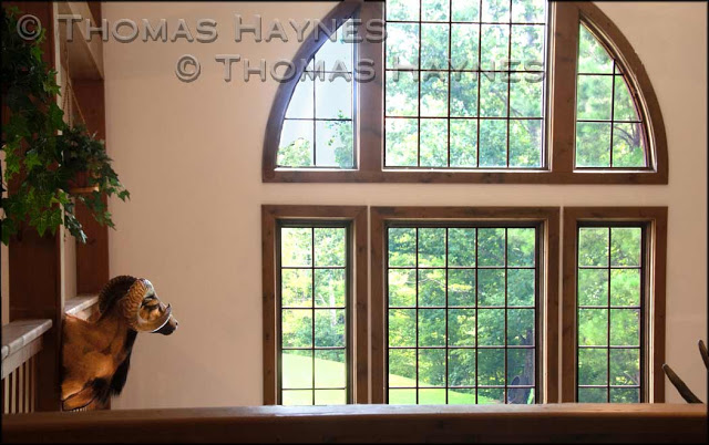 Overexposed window corrected with overlay, thomas haynes photoshoot