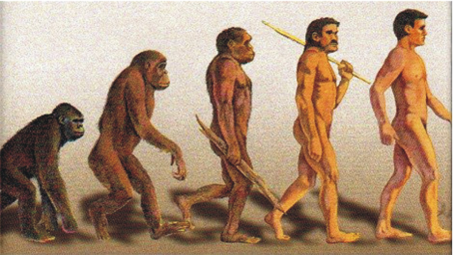 Evolution Monkey to Human