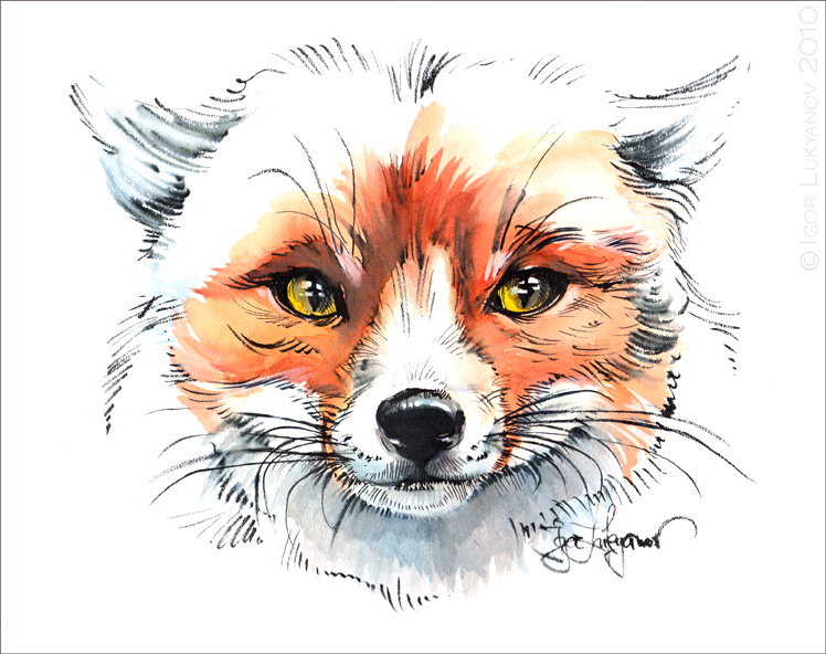 Fox face drawing - photo#12