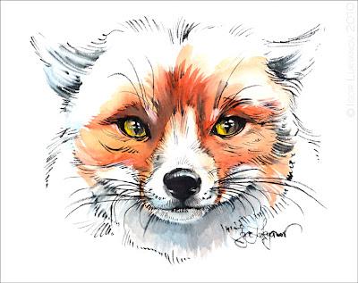 fox drawing (fox face)