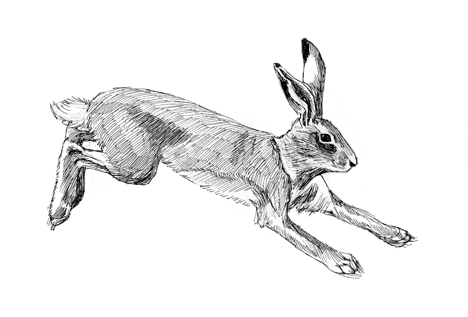Hare running drawing - photo#1