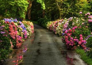 قصة قصيرة -10- :كن مفيداً ولو لديك عيوب flower-road-svetlana