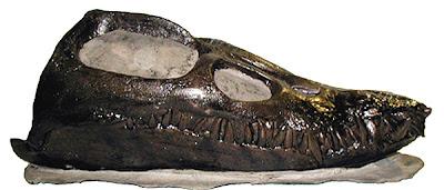 Elasmosaurus skull