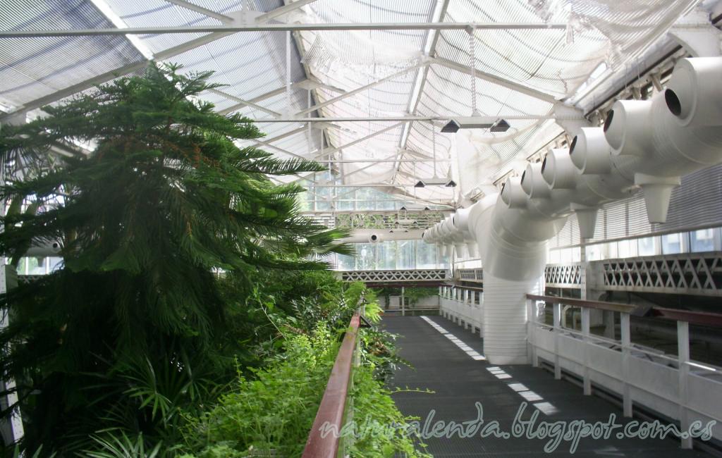 invernadero subtropical parte superior