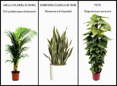 Tres plantas que aumentam a saúde no interior dos prédios