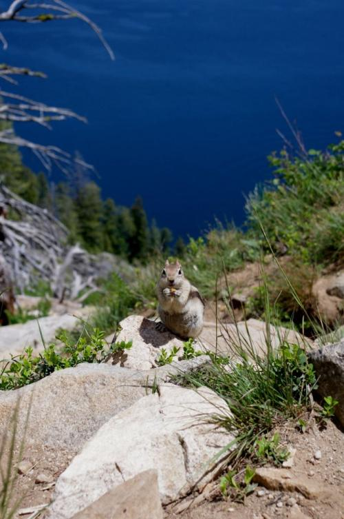 Grand Teton National Park Cute