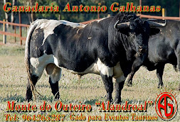 António Galhanas