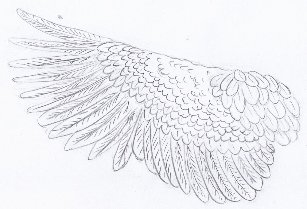 how to draw a bird with wings spread