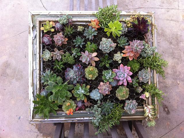mini jardim de cactus:DIY Vertical Succulent Garden