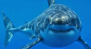 http://www.telegraph.co.uk/news/worldnews/australiaandthepacific/australia/11075433/Sharks-nine-times-more-likely-to-kill-men-than-women-study-says.html