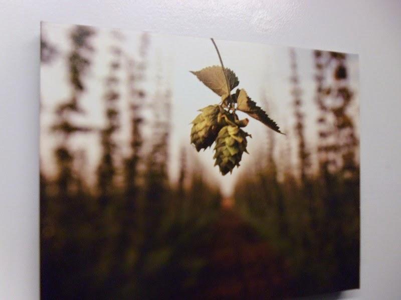 Hop cone artwork