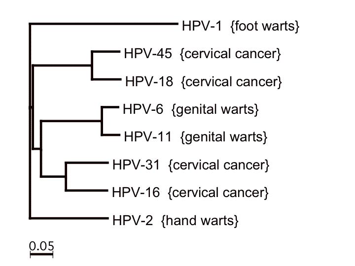 kanker serviks