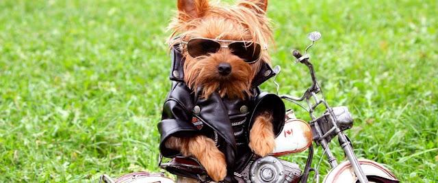 Perros vestidos muy graciosos
