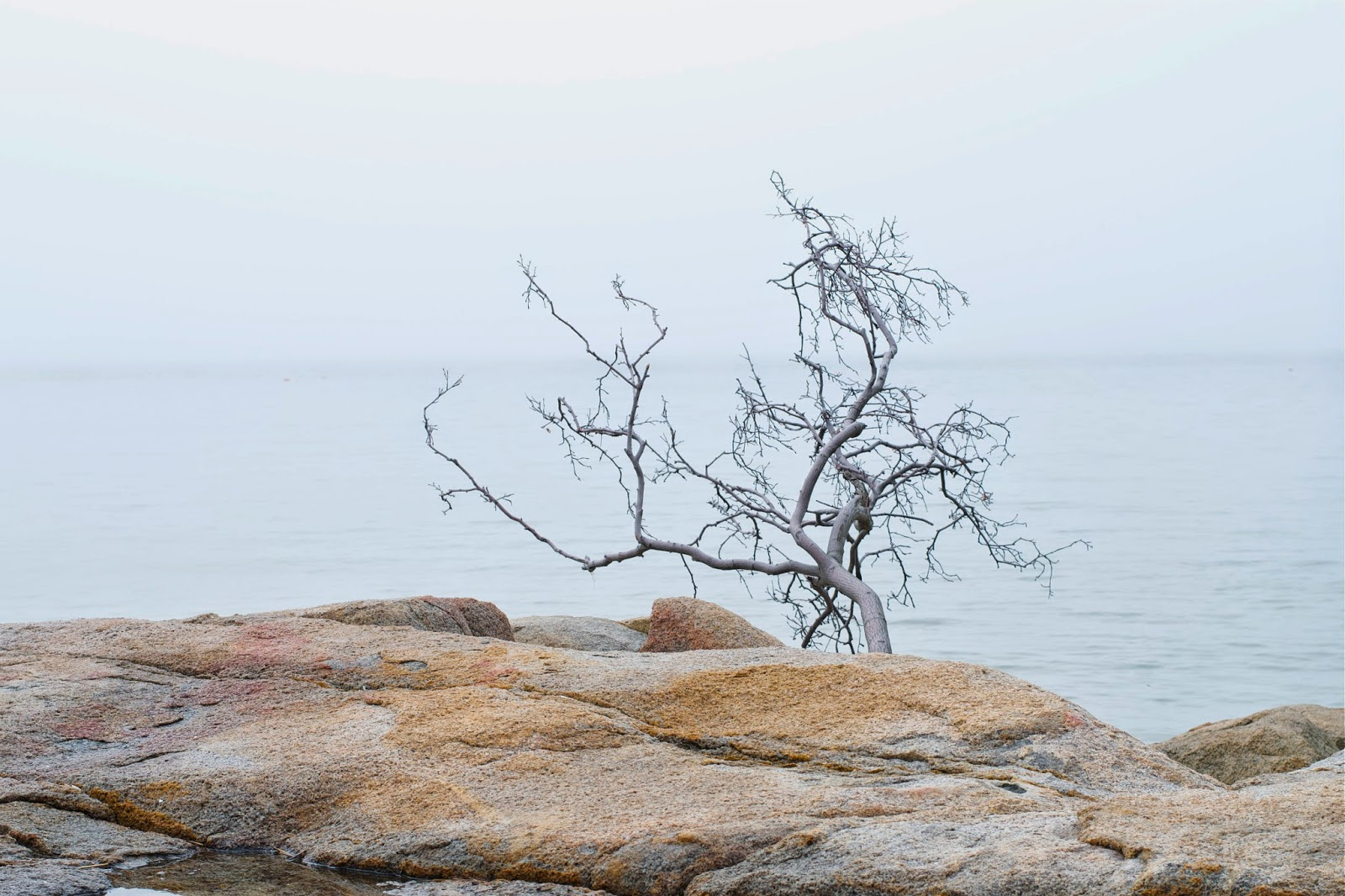 A branch that seems to have been torn and tossed onto the rocks at waters edge.