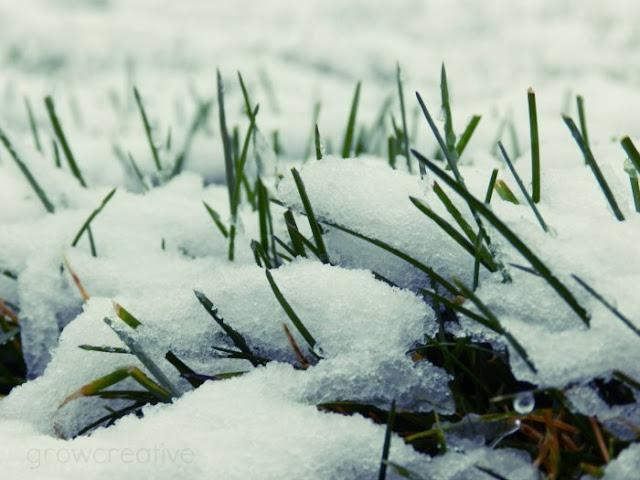 winter snow photography:growcreative
