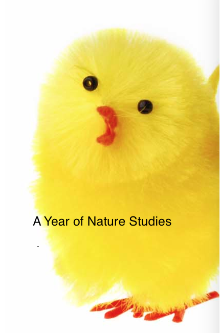 A Year of Nature Studies