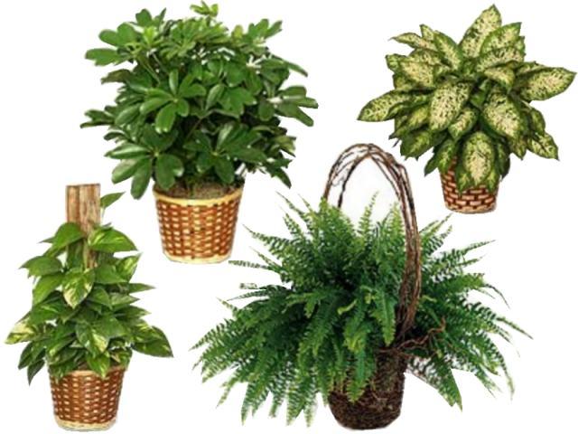 Feng shui total tips basicos feng shui for Plantas para dormitorio feng shui