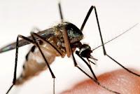 Curiosidades del mosquito