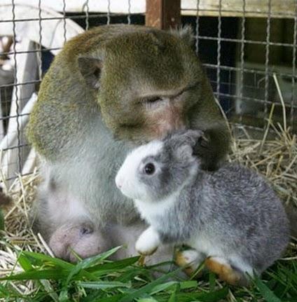monyet dan kelinci