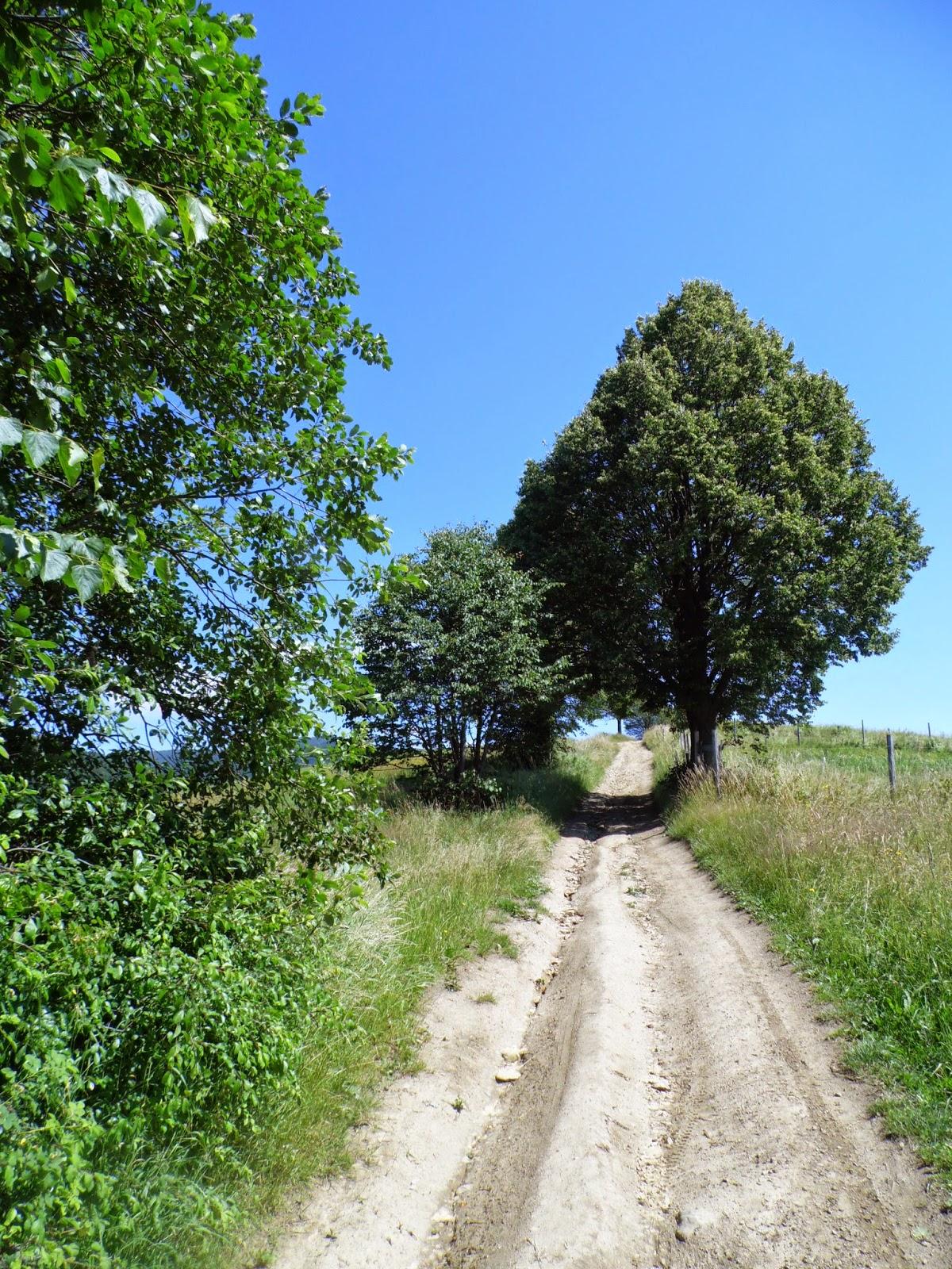 Łatwy kawałek szlaku Muszyna - Jaworzyna Krynicka