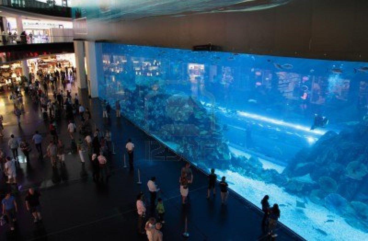 Amazing Magazine World Largest Aquarium In Dubai