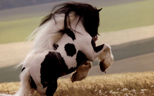 horses+pictures+%25284%2529