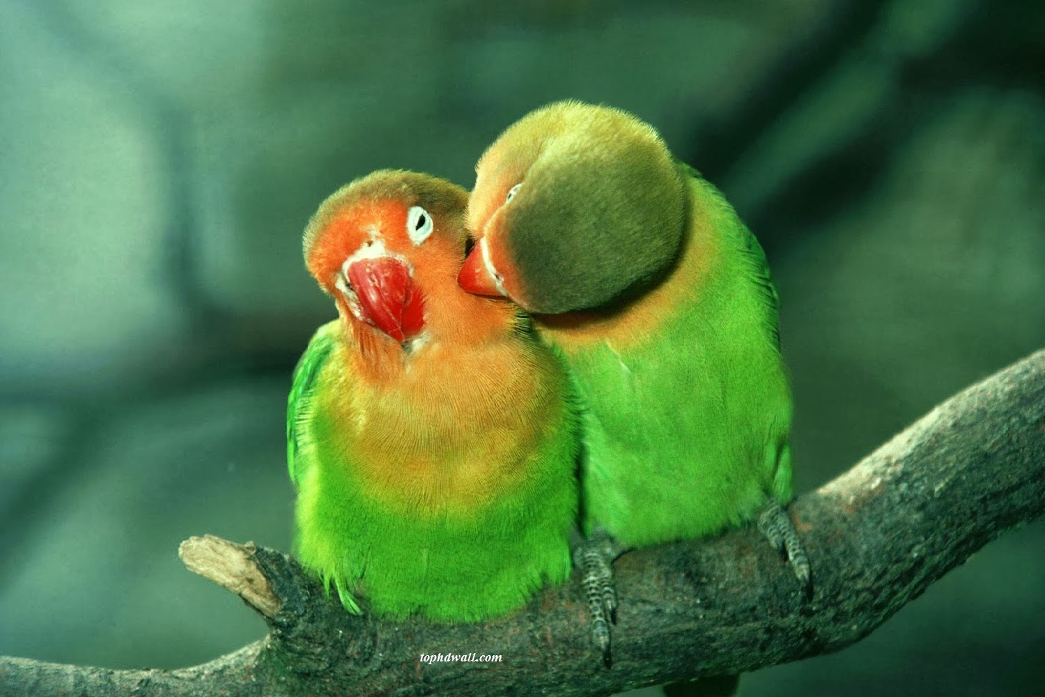Love Birds Wallpaper Images : Love Bird Wallpaper Auto Design Tech