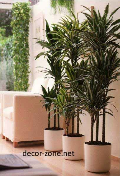 large indoor plants ideas, make a green corner