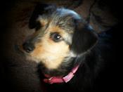 Meet Miss Maggie
