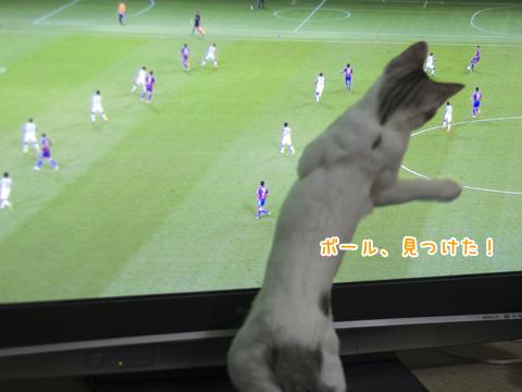 サッカー日本代表を応援する子猫