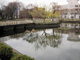 公園のサンシュユ