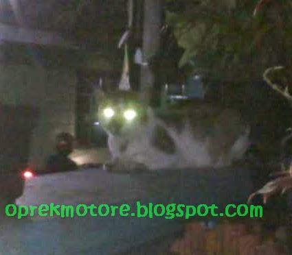 "Scothlite Pengganti ""Mata Kucing"""