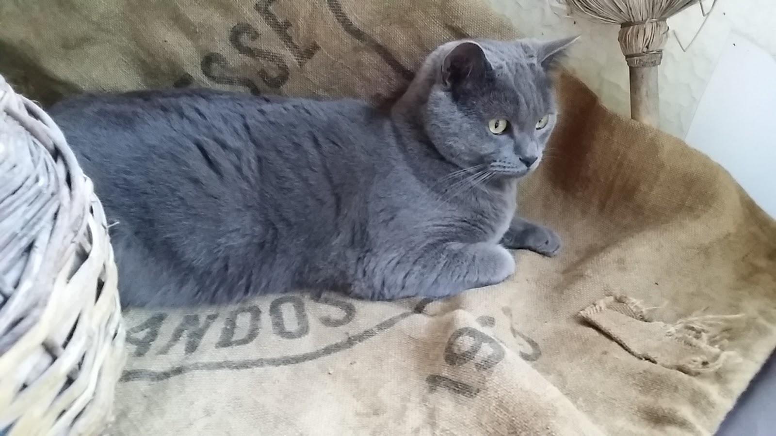 chat sur sac