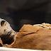 Αίγυπτος: Μούμια που μοιάζει με εξωγήινο θάφτηκε με τιμές Φαραώ [Βίντεο]