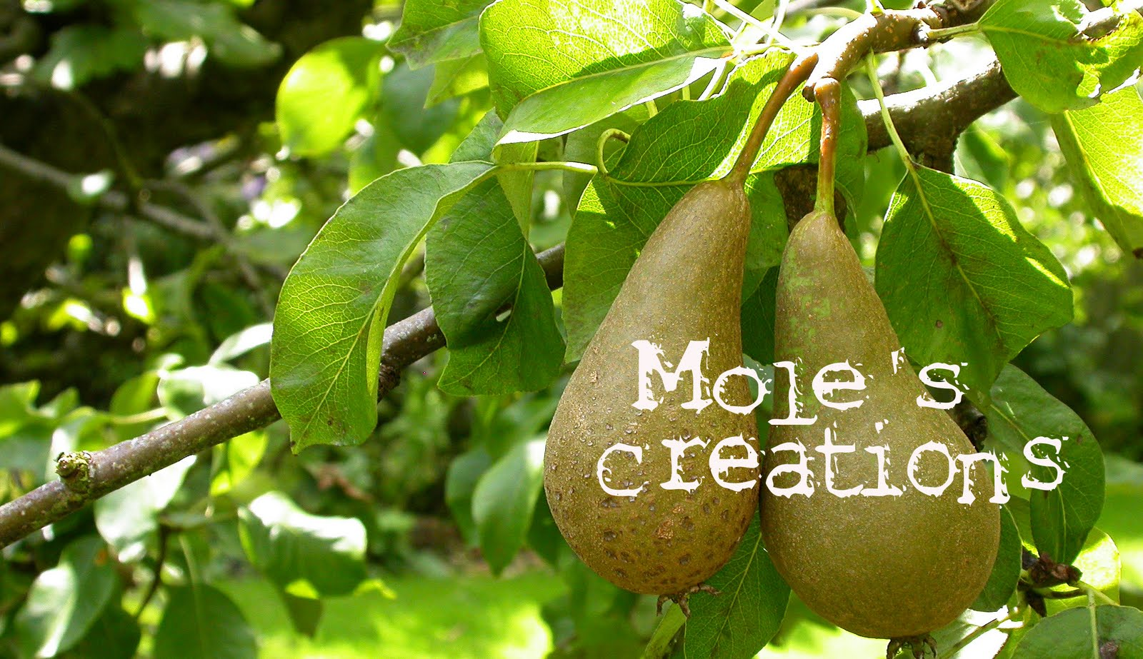 Mole&#39;s Creations