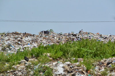 Dump yard near Pallikaranai wetland