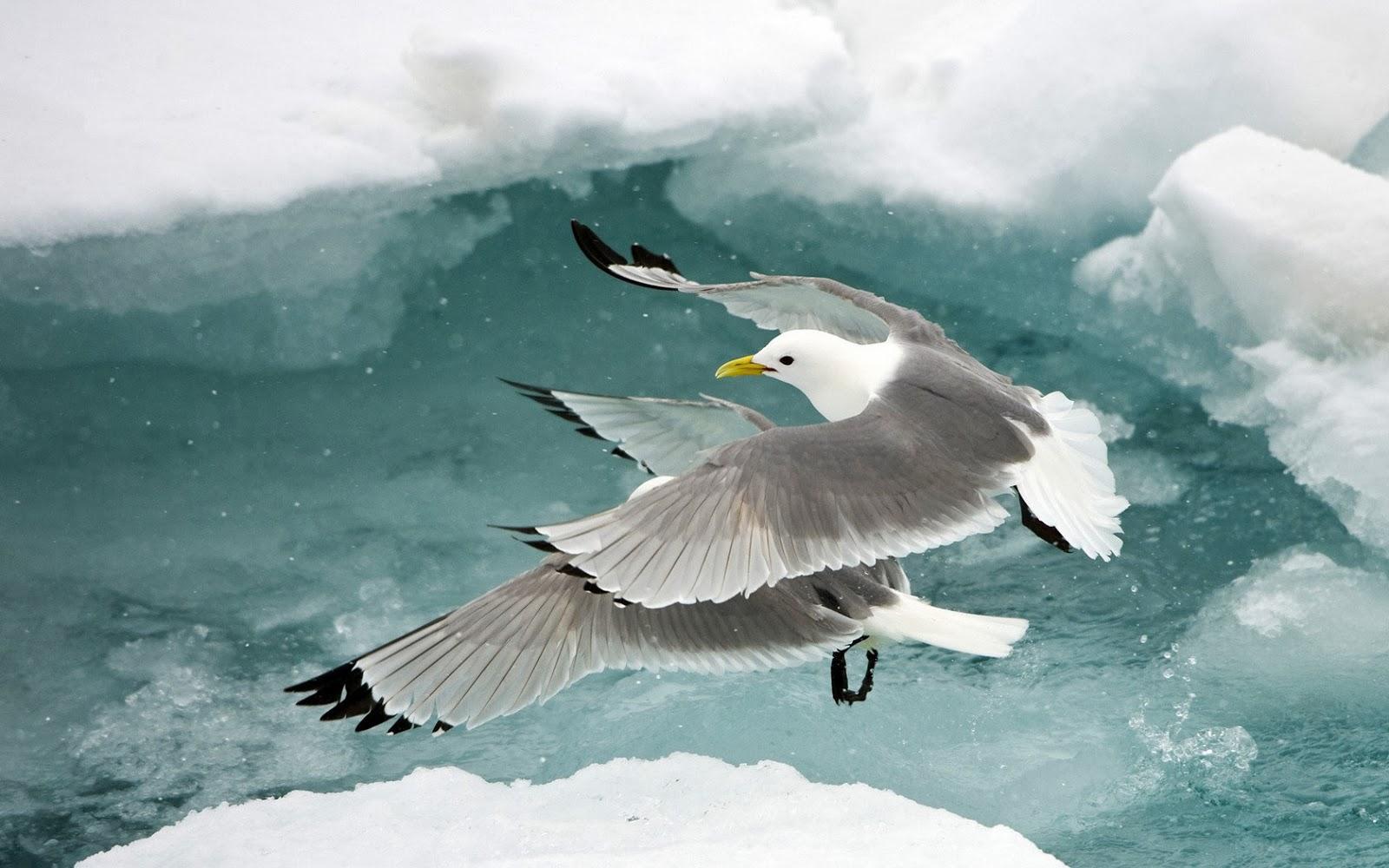 175 Birds Wallpapers Free Download